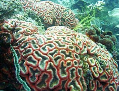 colourful-coral-karimunjawa