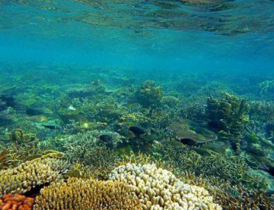 karimunjawa-underwaterworld